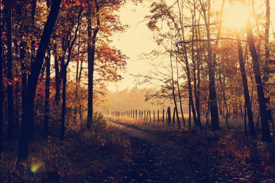 when-the-autumn-comes