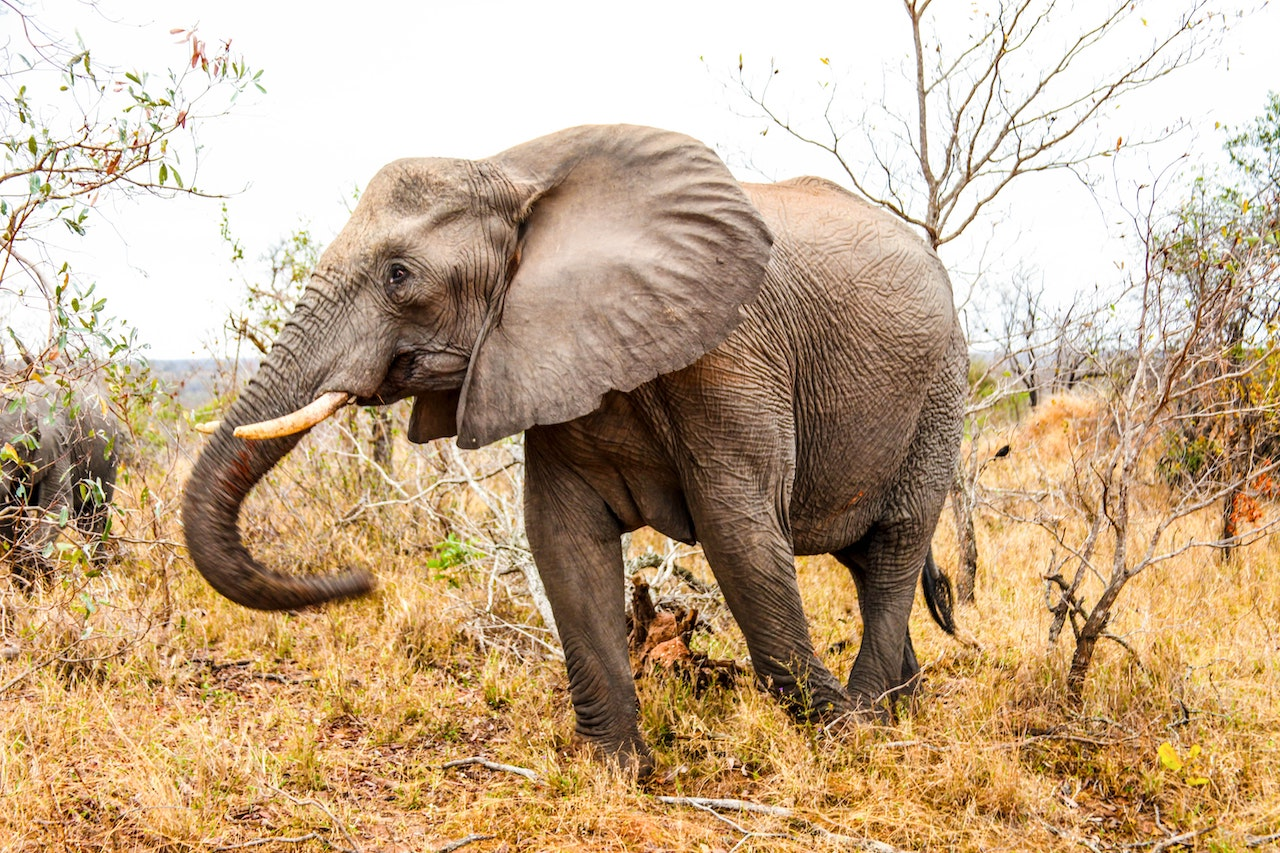 what is emotional resistance elephant